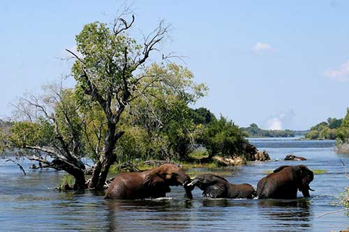 Old Drift Lodge on the bank of the Zambezi
