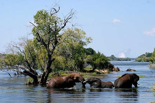 Old Drift Lodge on the bank of the Zambezi